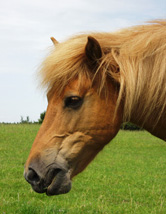 Ponyhof Reuter